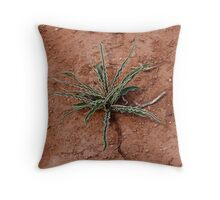 Cactus at Kodachrome State Park Utah USA Throw Pillow