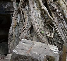 Apsara face in roots by kaw76