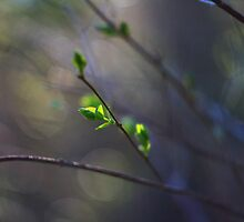 First Green of Spring by Mark Haynes Photography