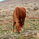 Grazing,Outside Reno Nevada USA by Anthony & Nancy  Leake