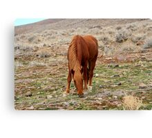 Grazing,Outside Reno Nevada USA Canvas Print