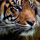 Sumatran Tiger Wildlife Big Cat-Lover by Val  Brackenridge
