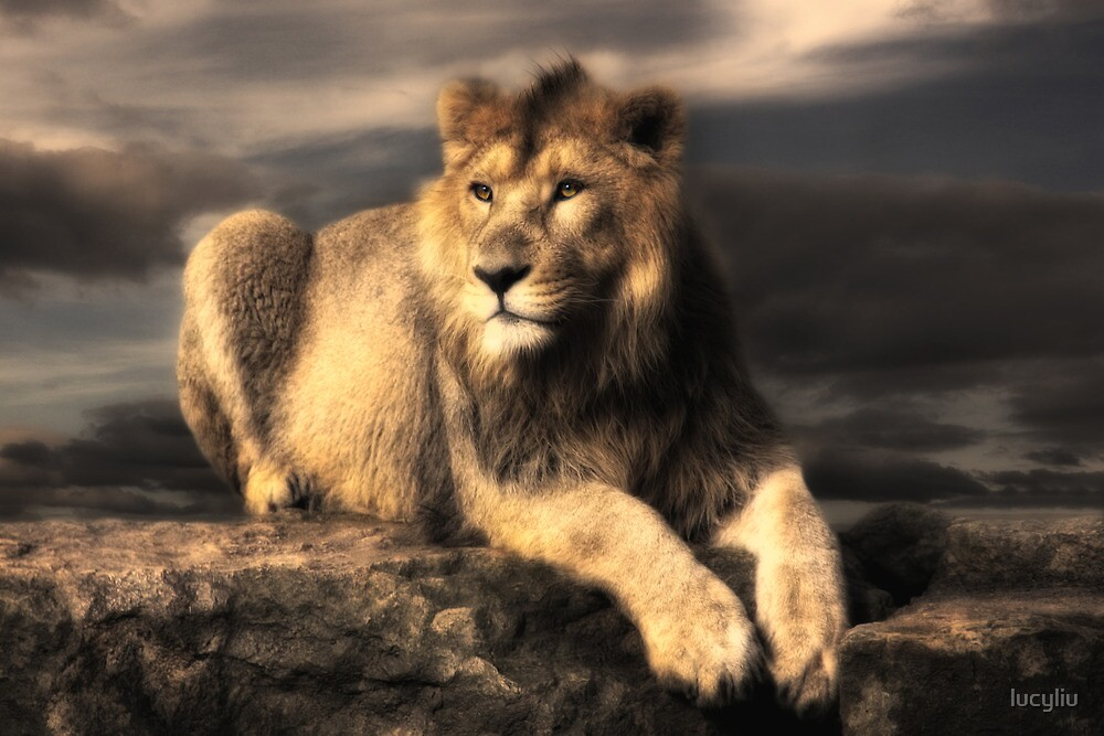 lion by lucyliu