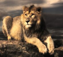lion by lucyliu