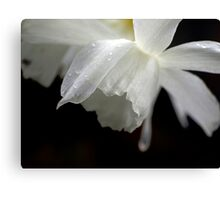 White Daffodil Floral Photo Print Canvas Print
