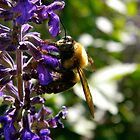 Bee by K. Abraham