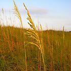 Dune Grass by K. Abraham