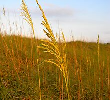 Dune Grass by K. Abraham
