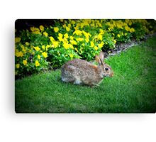 Silly Rabbit Canvas Print