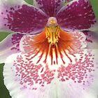 orchid by Erik Lopez