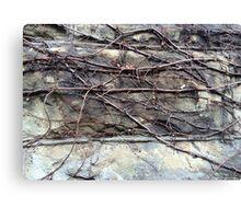 vinter vines Canvas Print