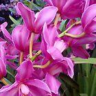 purple orchids by Erik Lopez