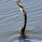 Anhinga Catch by Rosalie Scanlon