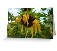 Scraggly Sunflower Greeting Card