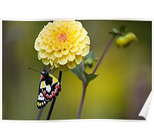 flower with butterfly Poster