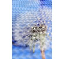 Embossed Dandelion Photographic Print