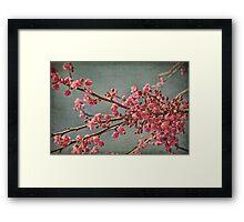 Spring blossom. Framed Print