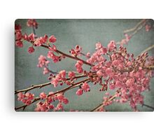 Spring blossom. Metal Print