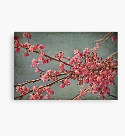 Spring blossom. Canvas Print