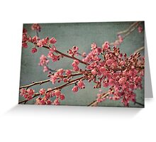 Spring blossom. Greeting Card