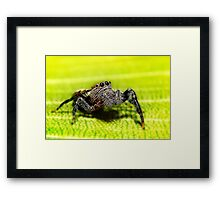 My little friend 01 Framed Print