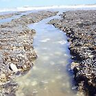 Rock pools by SnapThat