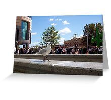 Vaguely None Of My Business - The Seagull And A Fire Drill Greeting Card