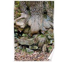 Treebeard, Goyt Valley Poster
