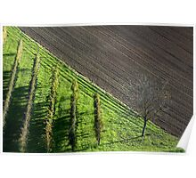 vineyards in earth of romagna Poster