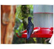 Mindo Hummingbird Oil Painting Poster