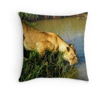 Lioness drinking water Throw Pillow