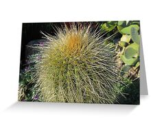 Prickly Cactus Close up Greeting Card