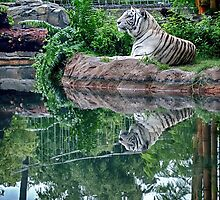 Reflected Rest by MSD1138