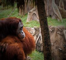 Contemplation  by MSD1138