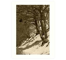 Bad Trees, Goyt Valley Art Print