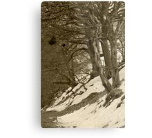 Bad Trees, Goyt Valley Metal Print