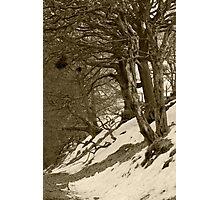 Bad Trees, Goyt Valley Photographic Print
