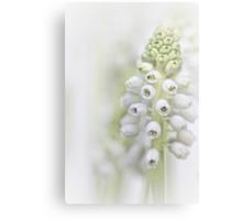 White Grape Hyacinth II Canvas Print