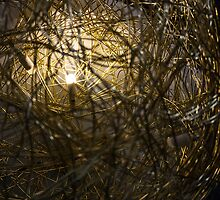 LED by Vladimir Fomin