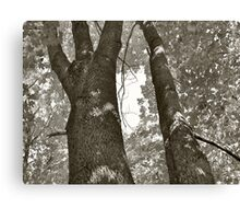 Tree two Canvas Print