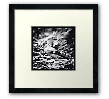 sparrow (003)  Framed Print
