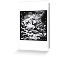 sparrow (003)  Greeting Card