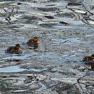 Family of ducks by JenniferLouise