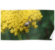 Spider On Yellow Yarrow Poster