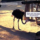 The Ostrich Joke by Thomas Orrow