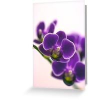 Phalaenopsis Orchid Greeting Card