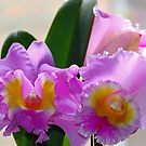 Cattleya Beauty by Debbie Oppermann