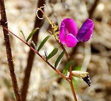 primitive orchid by WonderlandGlass