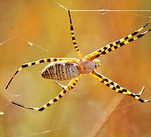 Glowing Spider by Kristen O'Brian