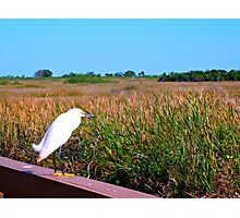 Bird in the Grasslands - Landscape and Nature Photography Photographic Print